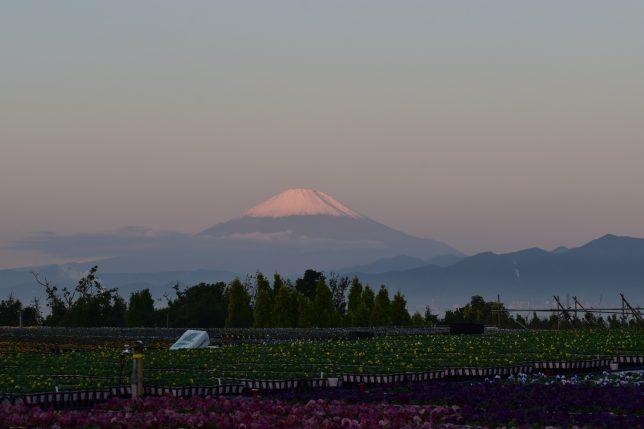 キャンパス裏から見る富士山